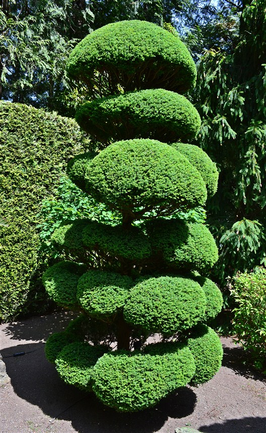 A well groomed tree