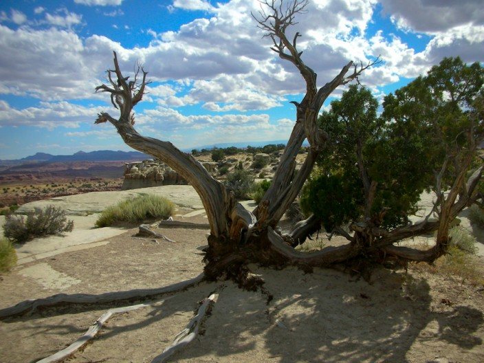 Along the San Rafael Swell