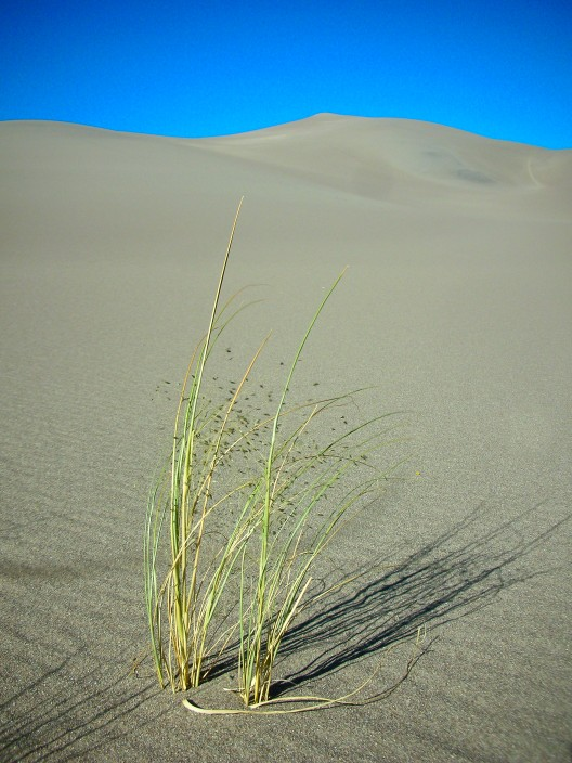 Life among the dunes in Colorado