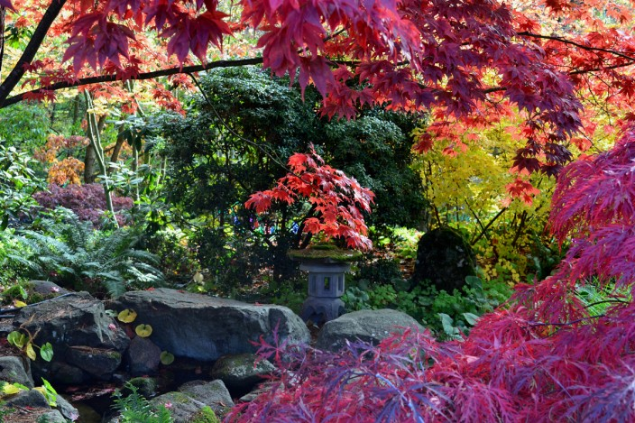 Fall colors in Bellevue Botanical Garden