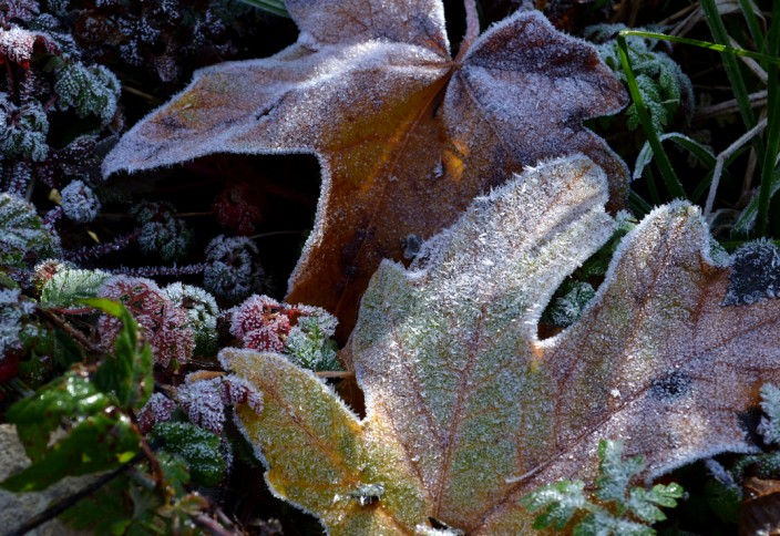 Frosty morning #2