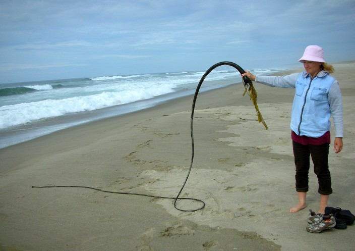 Is that a piece of kelp or a bullwhip?