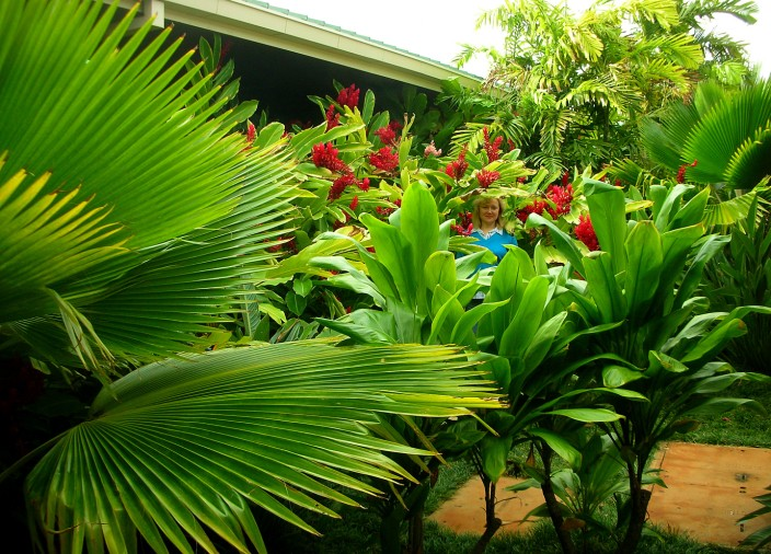 Lost in the jungle? No, it's just Lihue airport