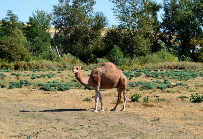 Lost in the Palouse? Someone took a wrong turn in the Sahara