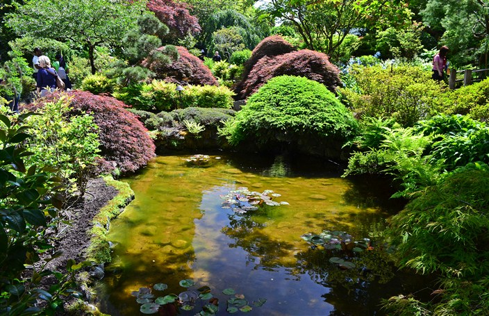 Pool of water and light in the Japanese Garden