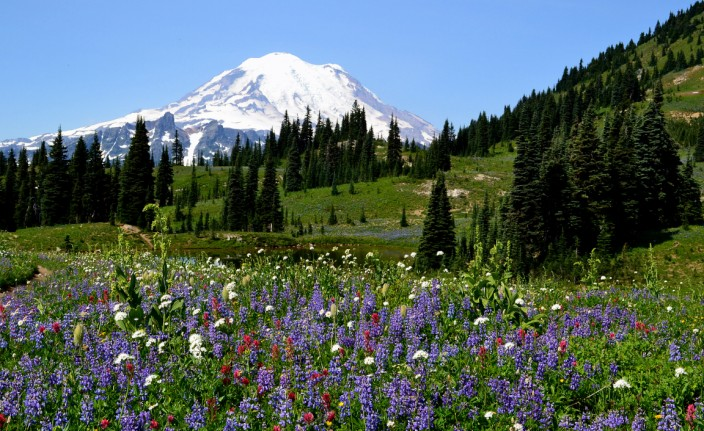 Rainier and wildflower meadow