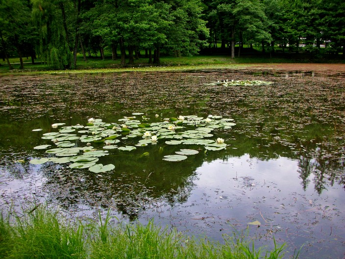 Water lilies and pond at Sanitori Karpaty